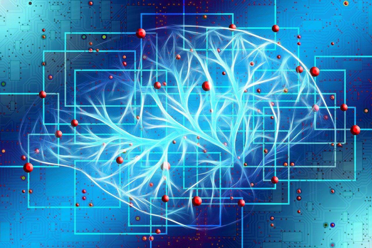 脳のシステム