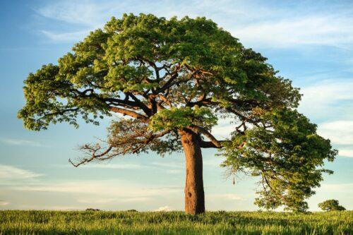 自然の木のエネルギー